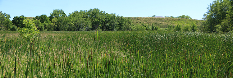 Rice Creek wetland near Long Lake Regional Park