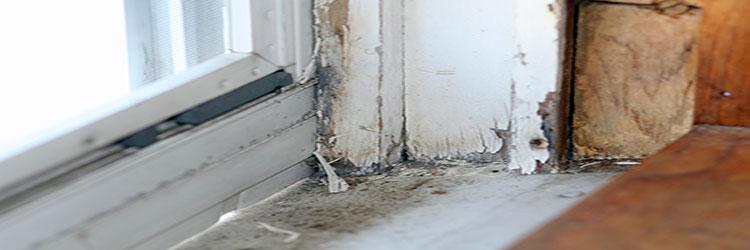 Lead paint peeling on window