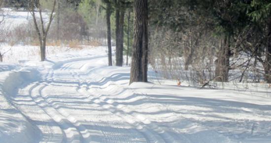 Cross-country ski trail at Tamarack Nature Center